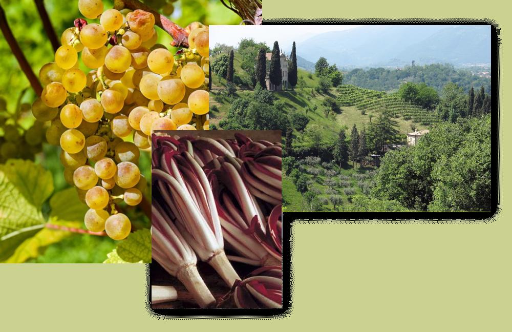 Cultura Paesaggio Agroalimentare
